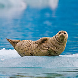 <p>Lindblad Expeditions-National Geographic's new itineraries feature plenty of opportunities for wildlife viewing. // © 2016 Lindblad...
