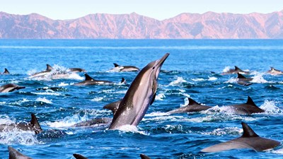 Cruise Review: Cruise & Maritime Voyages' Baja Itinerary