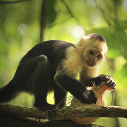 <p>Guests onboard Windstar's Costa Rica & Panama Canal itinerary can go on excursions that will get them up close to wildlife. // © 2016...