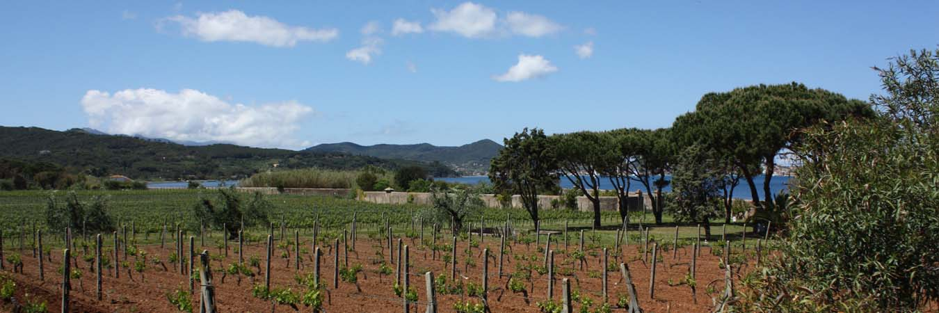 Wine Tasting on Tuscany's Elba Island