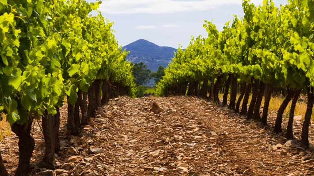 Spain has an ideal climate for certain grapes, such as Rioja and Rueda.  // © 2013 Thinkstock Feat
