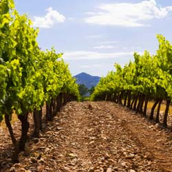 Spain has an ideal climate for certain grapes, such as Rioja and Rueda.  // © 2013 Thinkstock