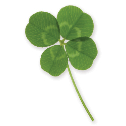 Four leaf clover // © 2013 Thinkstock