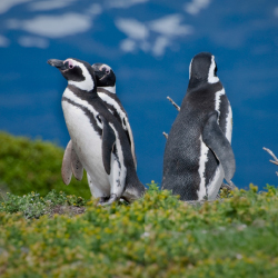 <p>Explore the Patagonian coast at a discounted rate. // © 2015 iStock</p><p>Feature image (above): Families explore Rome with the help of Bettoja...