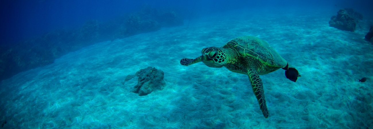 Snorkel and Sail on Maui With Trilogy Excursions