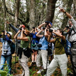 <p>Hawaii Forest & Trail guide Garry Dean helps a group of birdwatchers track a Hawaiian honeycreeper on the Puu Oo Trail. // © 2016 Hawaii Forest...
