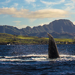 <p>Clients will love spotting humpback whales in Hawaii. // © 2017 Getty Images</p><p>Feature image (above): By boat or from the shore, Hawaii's...