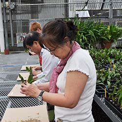 <p>During Akatsuka's Farm Tour & Tasting, clients can plant a baby orchid to take home. // © 2017 Akatsuka Orchid Gardens</p><p>Feature image...