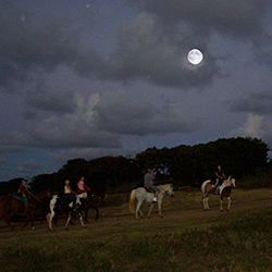 <p>Gunstock Ranch offers Hawaii's only guided moonlight horseback ride. // © 2015 Gunstock Ranch</p><p>Feature image (above): Koloa Zipline features a...