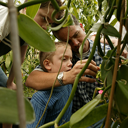 <p>Hawaiian Vanilla Company tours that explain how vanilla is grown and cultivated appeal to all ages. // © 2014 Hawaiian Vanilla...