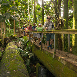 <p>Guests go off the beaten path during the Hilo Tropical Wonders tour. // © 2015 Hawaii Forest & Trail</p><p>Feature image (above): Clients are...