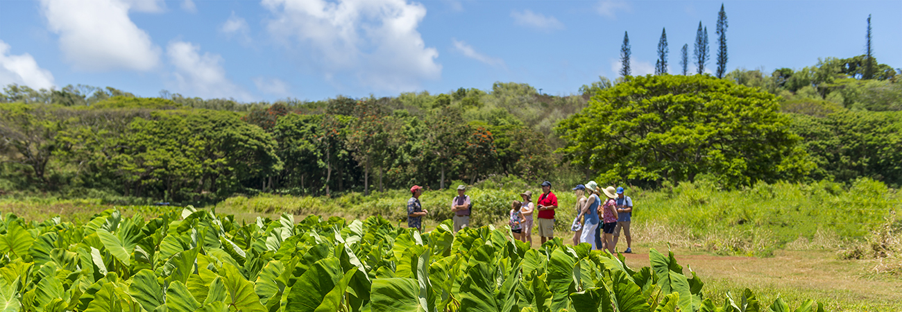 Sample Island Flavors With Kauai Food Tours