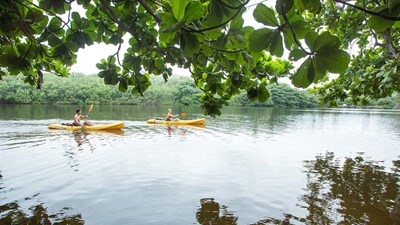 5 Fantastic Spots for Hawaii Kayaking