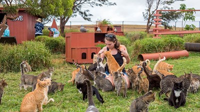 An Inside Look at Lanai Cat Sanctuary