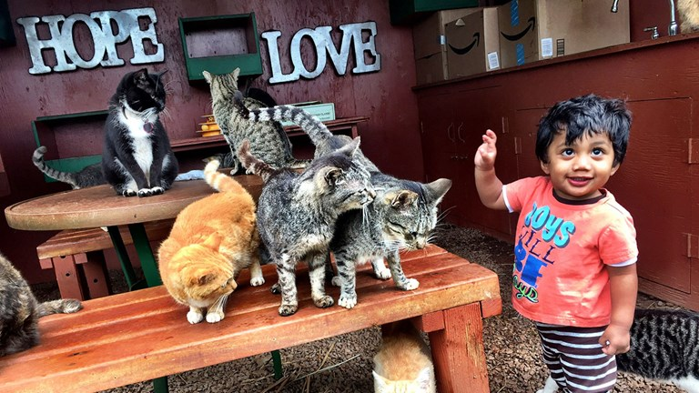 All ages get into the act at Lanai Cat Sanctuary.