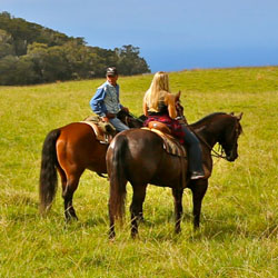 Maui horseback riding tours lead to beautiful views and cultural insights. // © 2014 Piiholo Ranch