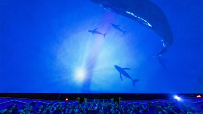 An Inside Look at Maui Ocean Center's Humpbacks of Hawaii Exhibit