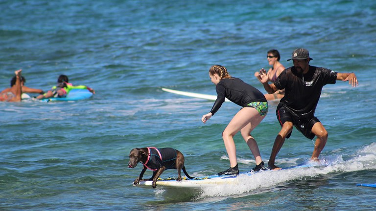 With Hawaii Surf Dogs, North Shore surfing lessons come with canine company.