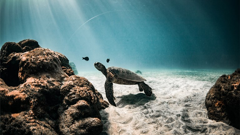 Teralani takes clients to top snorkeling spots, where they may spot sea turtles and other marine life.