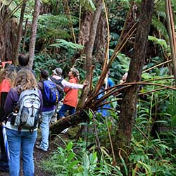 <p>On a KapohoKine Adventures tour in Hawaii Volcanoes National Park, guests explore the trail to Thurston Lava Tube. // © 2016 KapohoKine...