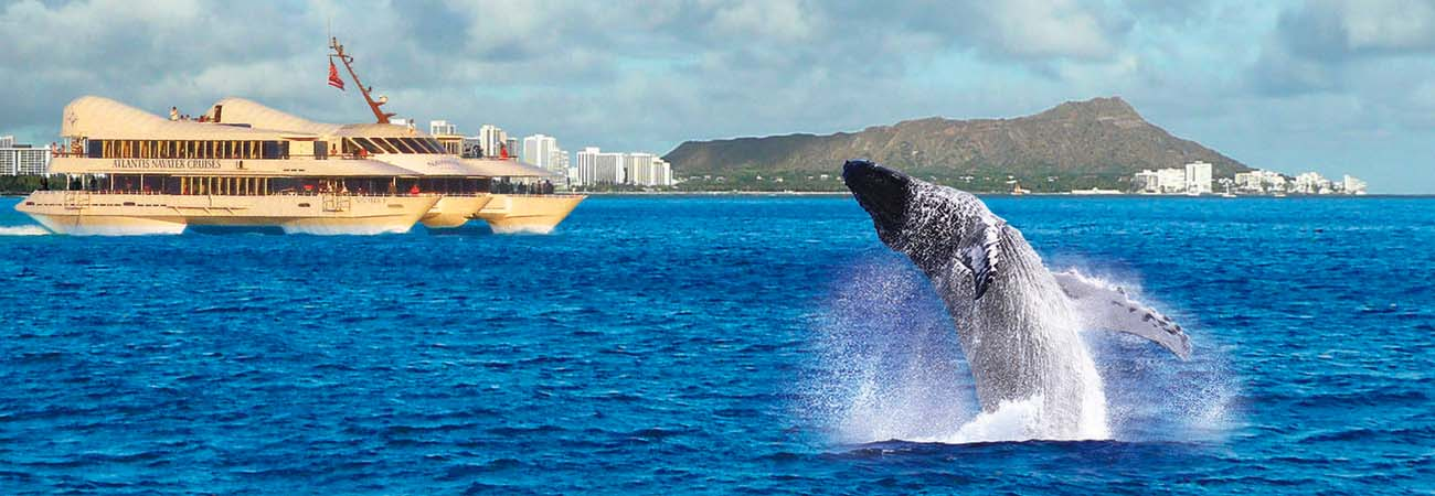 Hawaii Whale Watching Cruises