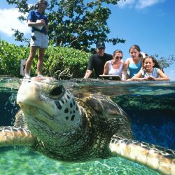 Turtle Mania teaches curious visitors about the flippered creatures. // © 2015 Maui Ocean Center