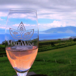 Guests of Sheraton Maui can take an exclusive tour of MauiWine. // © 2016 MauiWine