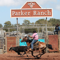 Thrilling rodeo action awaits guests at Parker Ranch. // © 2017 Sean Paine/Parker Ranch
