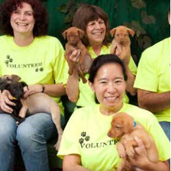The Maui Humane Society has introduced two new programs for visitors // (c) 2013 Maui Humane Society