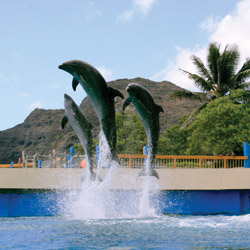 Dolphins put on a show at Sea Life Park. // © 2014 Sea Life Park