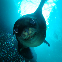 <p>Playful sea lions engage with humans. // © 2015 La Paz Tourism</p><p>Feature image (above): Hammerhead sharks roam the waters from June through...