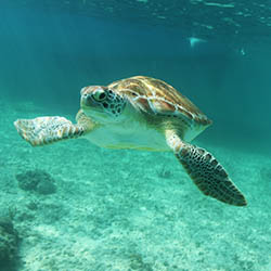 <p>Inah Reef, located off the coast of Mexico, features several species of marine life, such as sea turtles, manta rays and several types of fish. //...