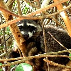 <p>The Sian Ka'an biosphere reserve on the east coast of the Yucatan Peninsula has some 100 species of mammals. // © 2016 Mexico Tourism...