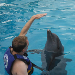 <p>The writer joining in the fun at Dolphin Discovery Vallarta. // © 2014 LatinFlyer.com</p><div></div>