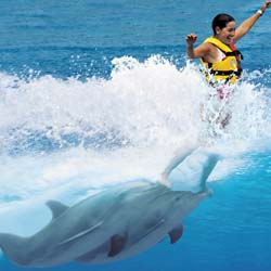 <p>At Dolphin Discovery in Nuevo Vallarta, guests can play and pose for pictures with dolphins. // © 2014 Dolphin Discovery</p><p>Feature image...