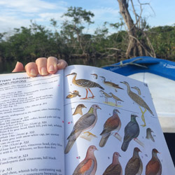 <p>More than 250 species of birds stop in Mexico's La Tovara National Park, which rests along the Pacific Flyway migration route. // © 2015 Chelsee...