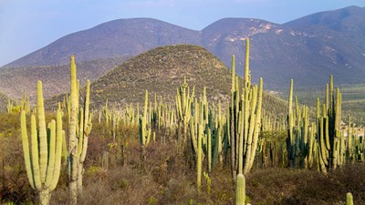 Mexico Adds UNESCO World Heritage Site Tehuacan-Cuicatlan Valley