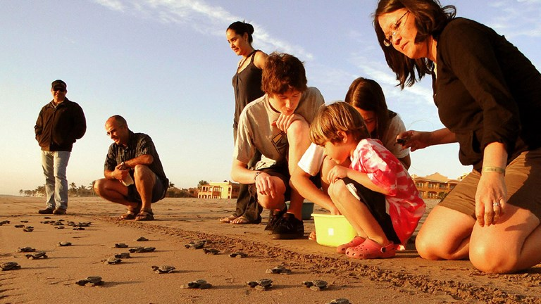 Guests can participate in releasing baby turtles to the sea.