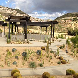 <p>A tour of Cacti Mundo botanical gardens is available to guests at any Pueblo Bonito property. // © 2016 Pueblo Bonito Oceanfront Resorts and...