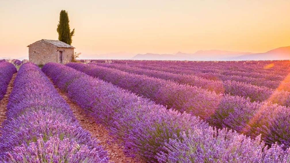 Interest in France, including Provence and its lavender fields, is expected to grow. // © 2016 iStock 2