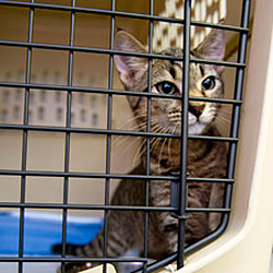 <p>Agents should be in the know about clients' potential animal-related allergies prior to booking flights. // © 2015 Humane Society of the United...