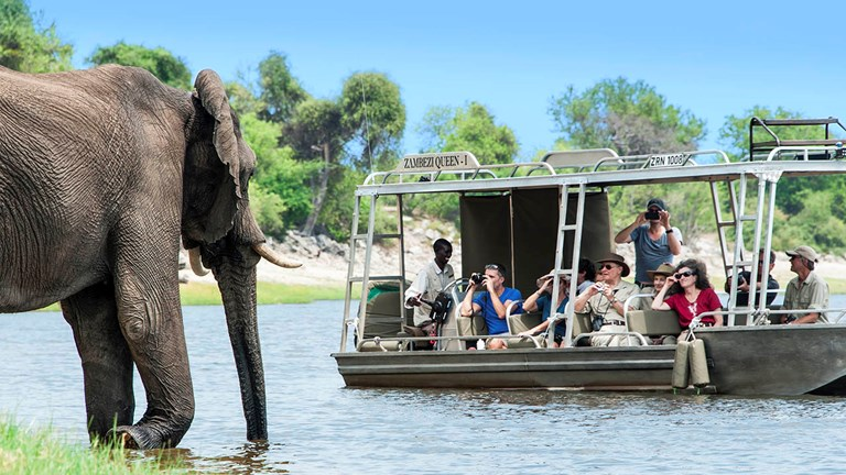 Guests onboard AmaWaterways' Discover Africa sailings will have a chance to see wildlife up close.