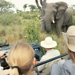 Dream vacations include photographing the Big Five on safari. // © 2013 Thinkstock