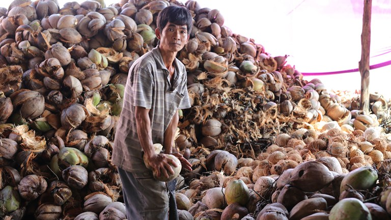 A day trip from Ho Chi Minh City, Ben Tre is one of Vietnam's top producers of coconuts.