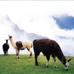 Contiki has combined Peru with other destinations. // © 2013 Thinkstock