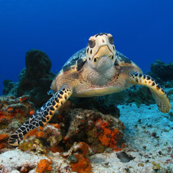 Cozumel is a popular destination for scuba divers. // © 2014 Journese