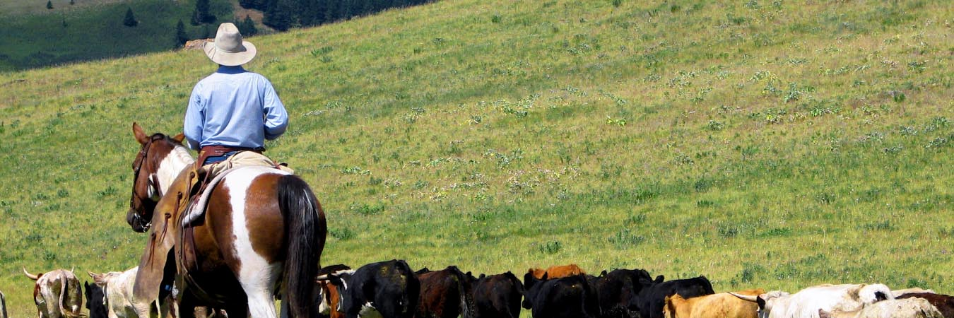 Alberta Ranches Call to Visitors