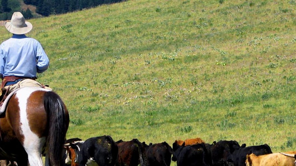 A cattle drive gives guests the opportunity to truly experience Alberta's nature. // © 2013 Sierra West Cabins & Ranch Vacations 3