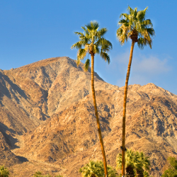 <p>Palm Springs first gained popularity as a vacation spot for celebrities. // © 2016 stella levi</p><p>Feature image (above): The Ritz-Carlton,...