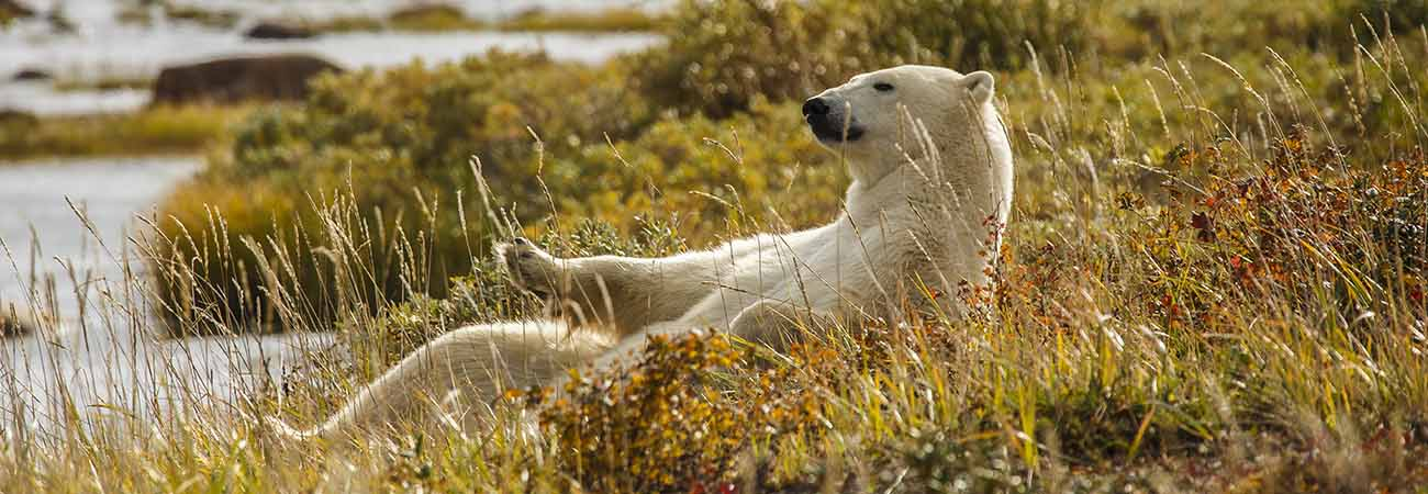 A Face-to-Face Way to See Churchill Polar Bears